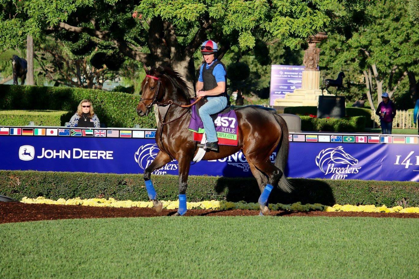 Miss Temple City Takes On The Breeders Cup Sagamore Racing