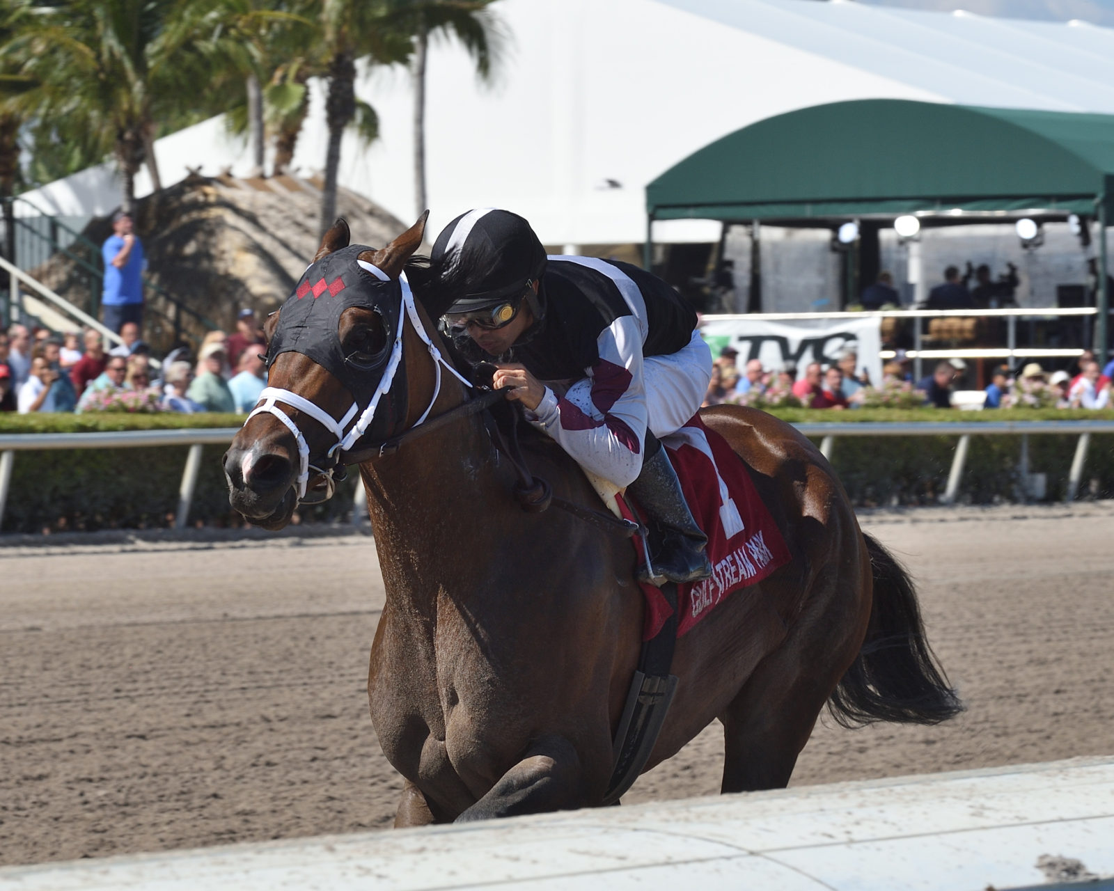 Weekend Recap: Recruiting Ready Wins G3 Gulfstream Park